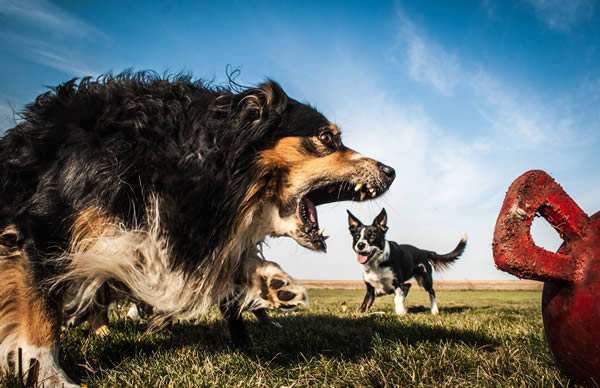 a99272_perspective_4-dog