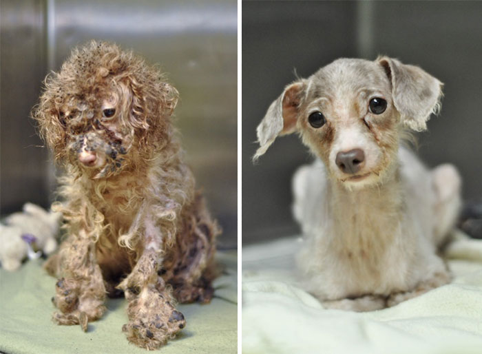 rescue-dogs-before-after-adoption-7-586658cc24c42__700