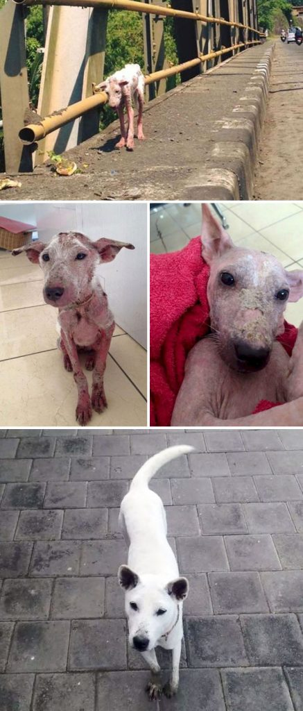 rescue-dogs-before-after-adoption-72-586b7fcf2a3c0__700