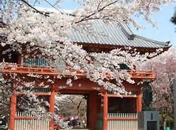 清水公園・桜