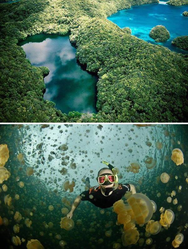 a99783_swiming-hole_5-jellyfish