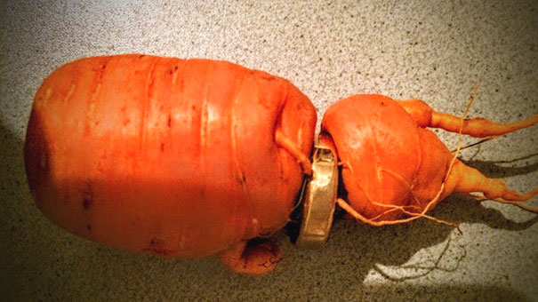 lost-wedding-ring-carrot-germany-1