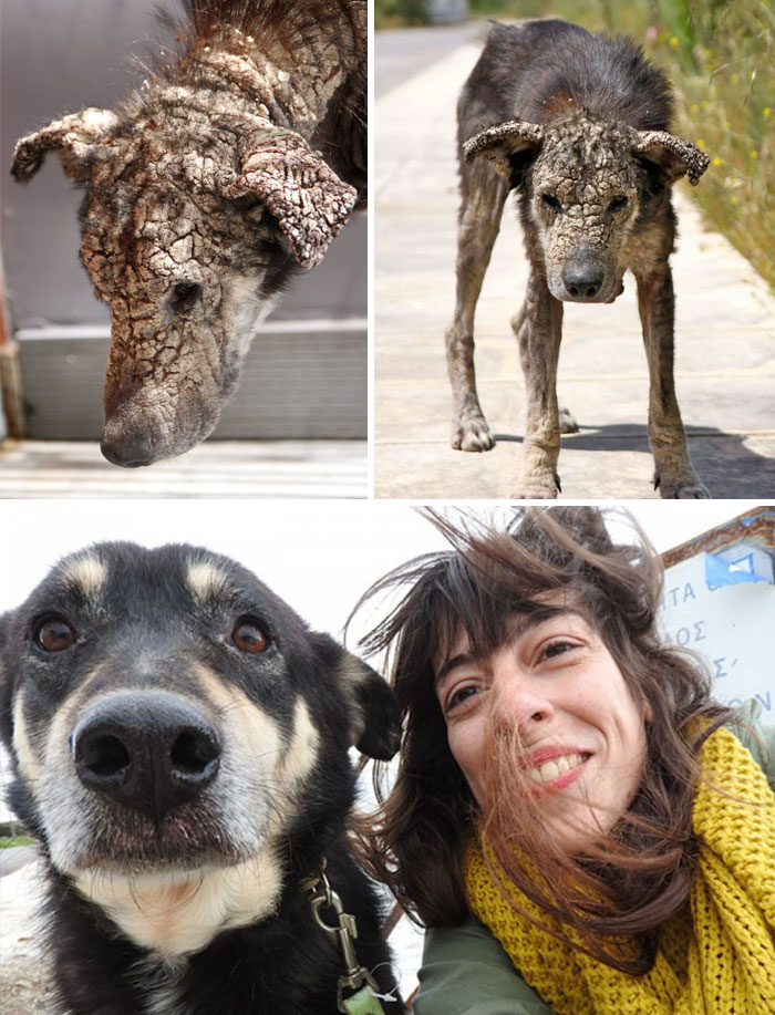 rescue-dogs-before-after-adoption-3-586658c295e11__700